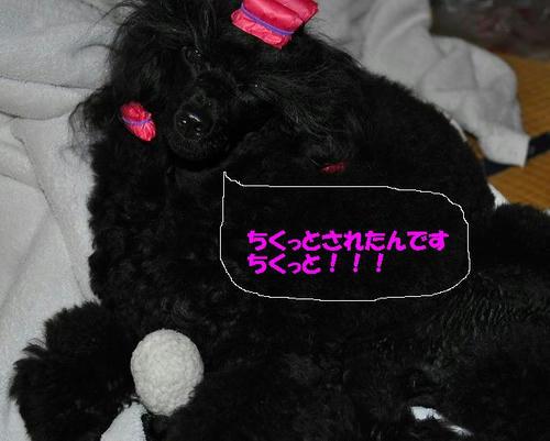 a-DSC_0203.jpg