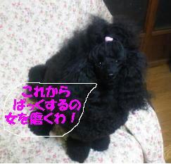 201112231909000.jpg