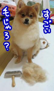 IMG_00050.jpg