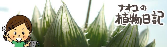 ナオコの植物日記