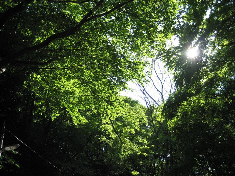 blog20120512takao_IMG_1754_mini800px.jpg