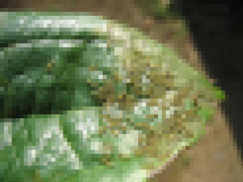 blog20120527kuremagaityuu_IMG_3235_mini800px.jpg