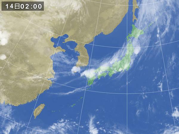 blog20120814_kinseisyoku_2gms.jpg