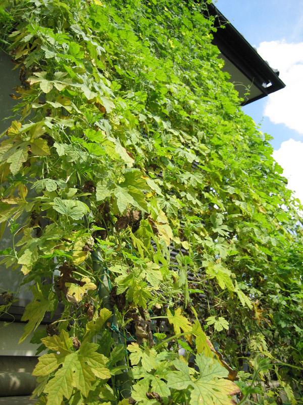 blog2012016_netutaisaku_IMG_6458_mini800px.jpg