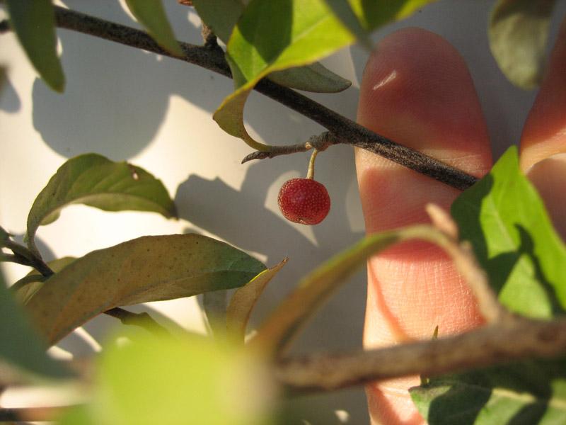 blog20121021_akigumi_IMG_8088_mini800px.jpg