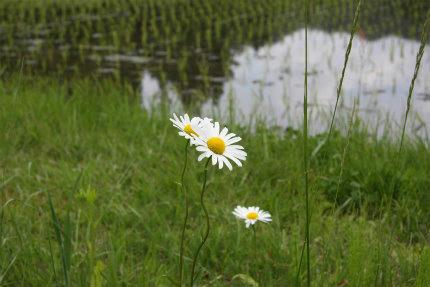 20100606_5.jpg