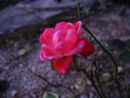 20101126_2.jpg