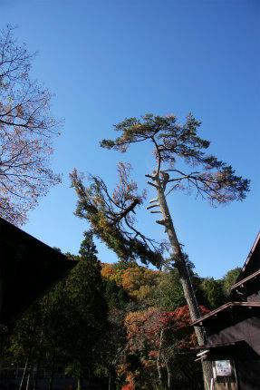 20121117_3.jpg