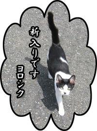 猫ちゃん。