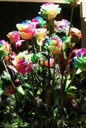 rainbowrose_zentai.jpg