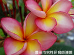 PC250575.jpg