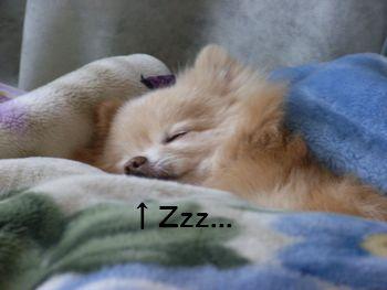 よく寝てるし。