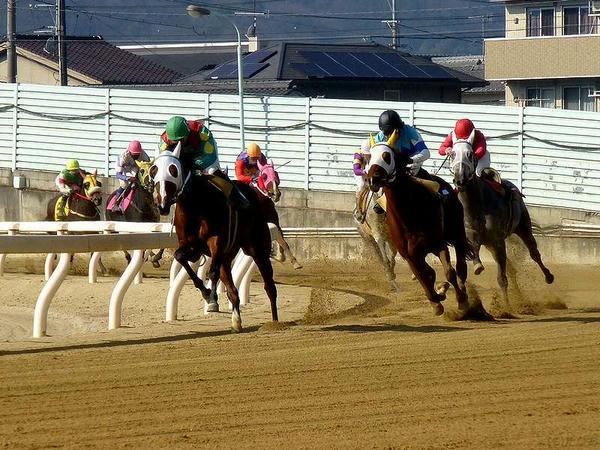 第2Rで3,4角を回る競走馬