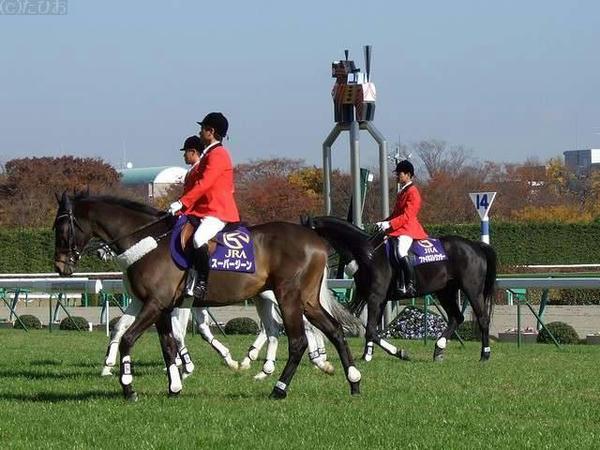 スーパージーン号他、出張してきた新潟競馬場の誘導馬