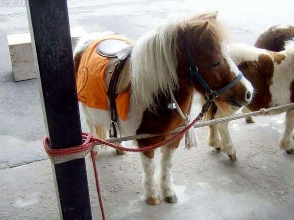 入り口のところで乗馬体験と餌やりをしていたポニー