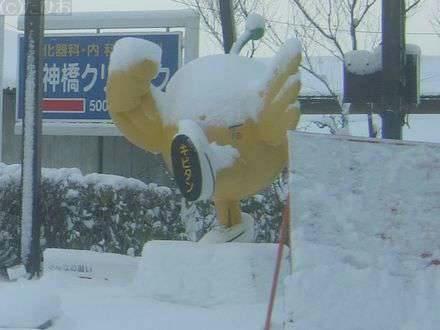 雪を被ったキビタン