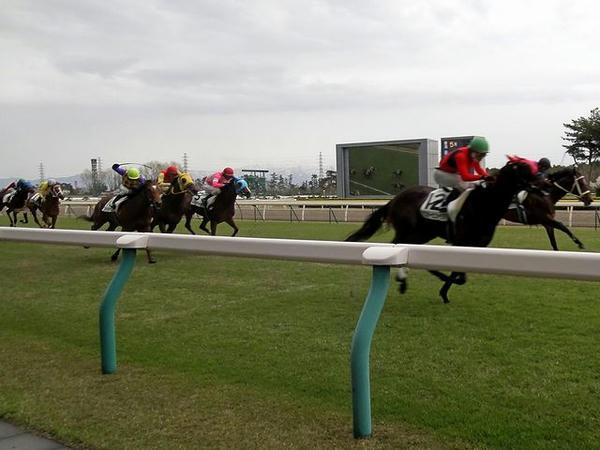 直線競馬で外ラチ沿いを疾走する競走馬
