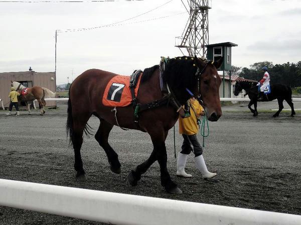 パドックを周回中の競走馬