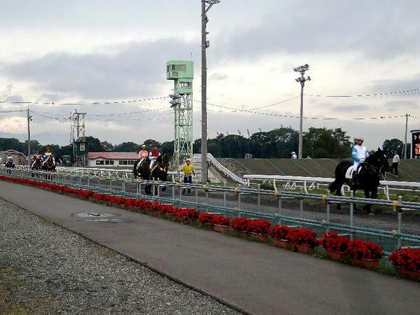 スタート地点に移動する競走馬