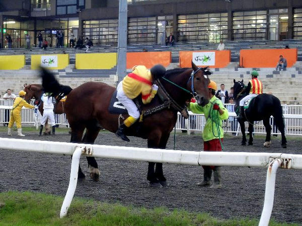 大河原ジョッキーが競走馬に跨るところ(2)