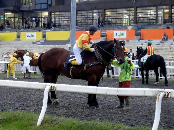 大河原ジョッキーが競走馬に跨るところ(3)