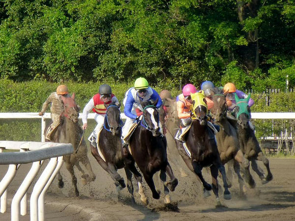 4角をまわる競走馬