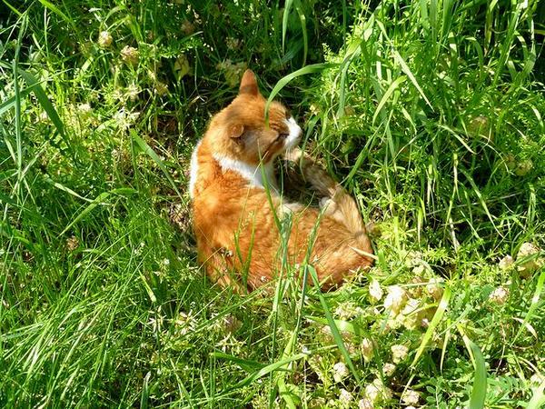 薬研堀あたりにいた猫