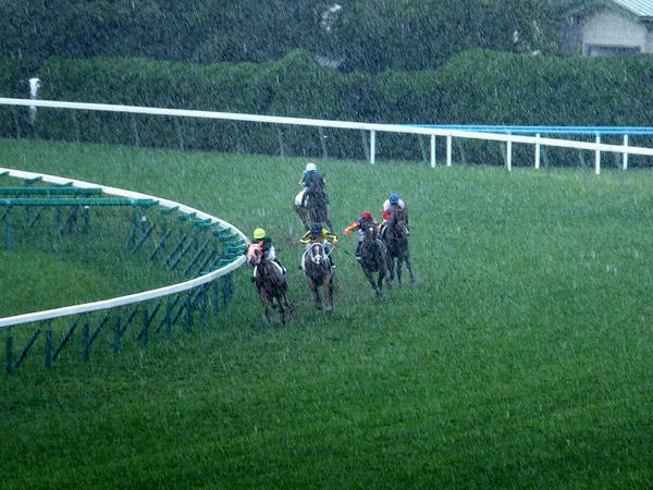 驟雨の中4角を回る競走馬
