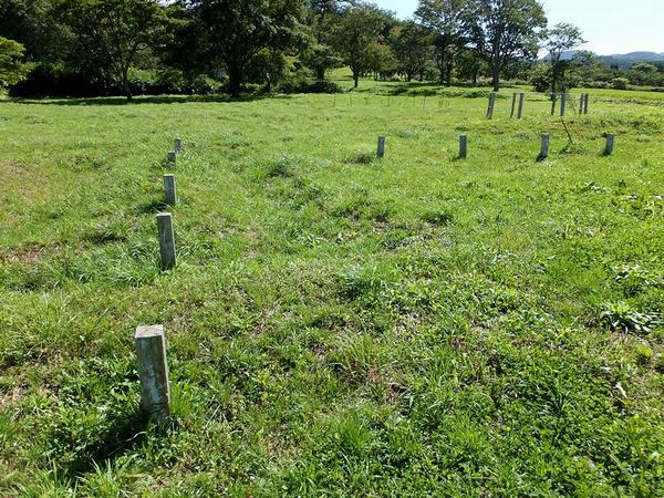 米倉跡付近の柵列跡