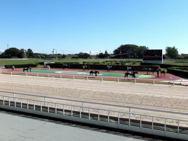 パドックを周回する競走馬