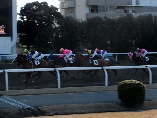 バックストレッチを走る競走馬(5R)