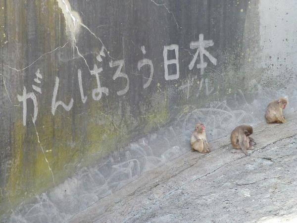猿山の壁に描かれていた「がんばろう日本(ザル)」