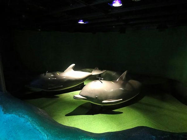 イルカ型の乗り物
