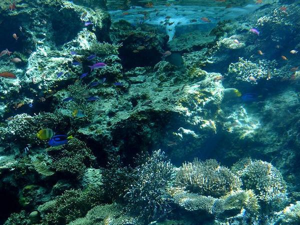 『サンゴの海』の水槽