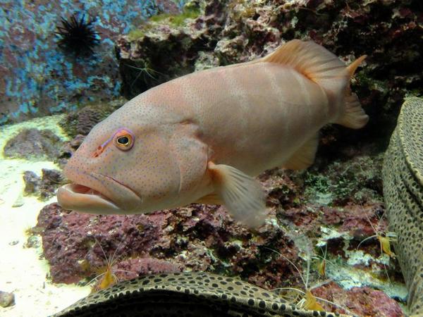 『熱帯魚の海』のスジアラ