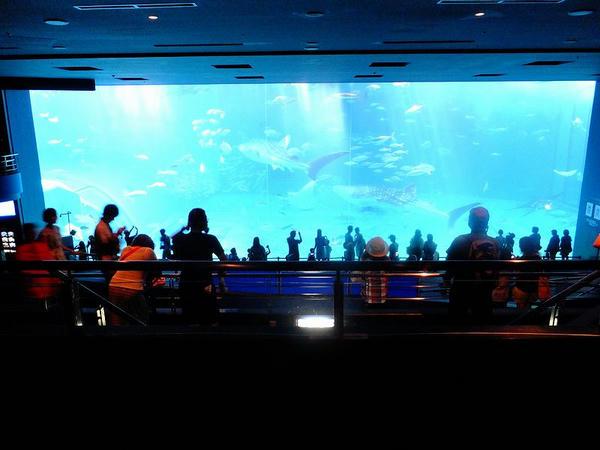 『黒潮の海』の大水槽