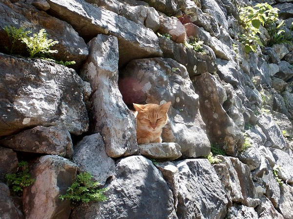 平朗門に居た猫