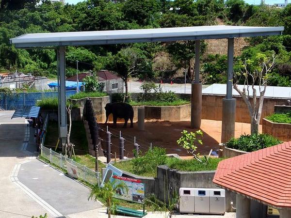 象舎と象の(多分)琉太さん