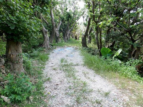 林の中の小径