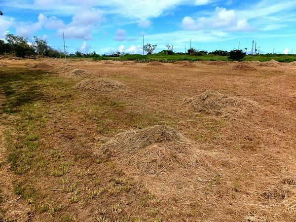 石積西側の草っ原
