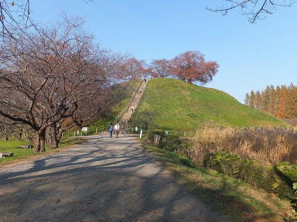 石田堤方向から見た丸墓山
