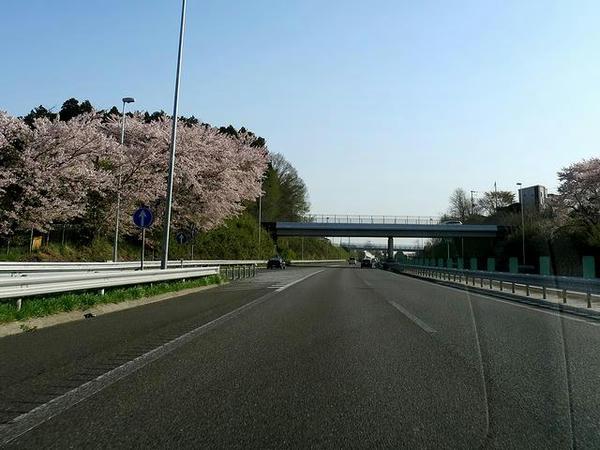 桜咲く東北道を