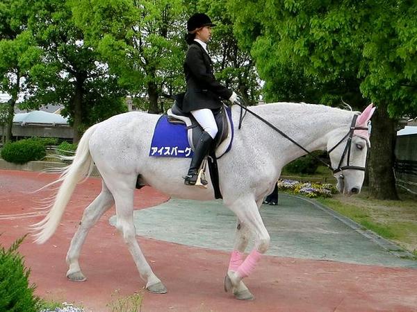 誘導馬のアイスバーグ号