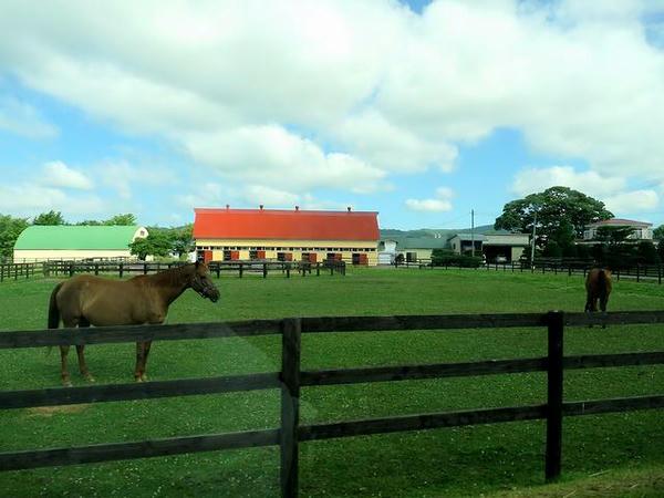 沿線の牧場
