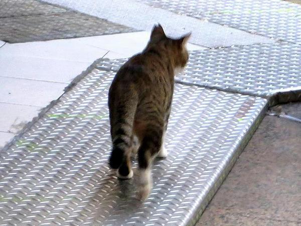 ホテルへの帰り道で見かけた猫その1