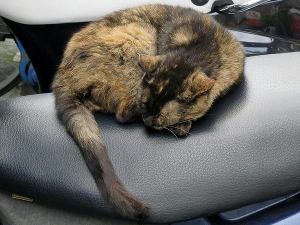ホテルへの帰り道で見かけた猫その2