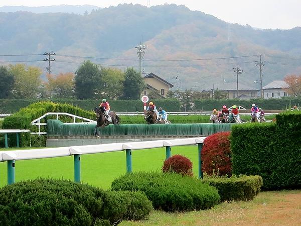 襷コースの障害を飛ぶ競走馬