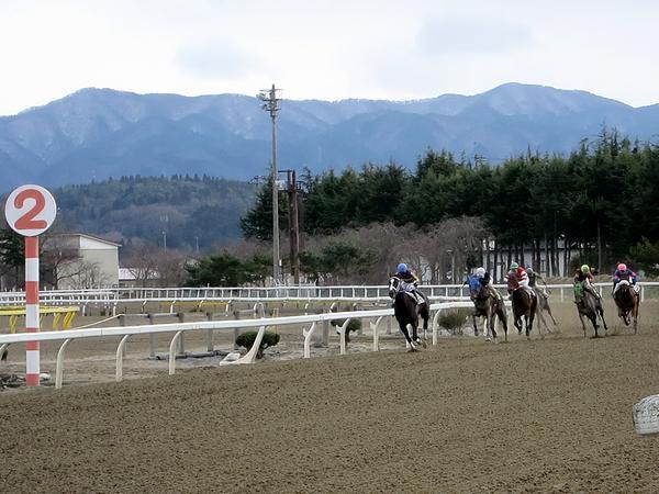 最終コーナーを立ち上がる競走馬