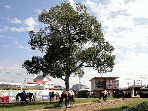 楠と周回する競走馬