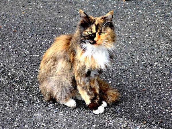 入場門付近にいた猫